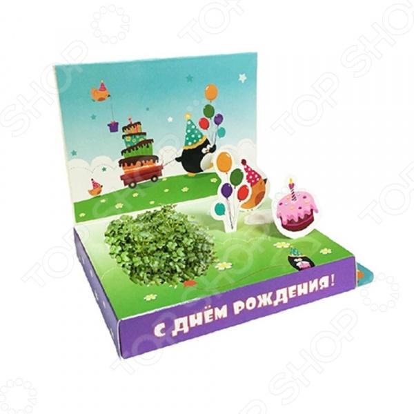 Набор подарочный для выращивания Happy Plants «С Днем рождения! Пингвинчик» наборы для выращивания happy plant подарочный набор живая открытка с любовью