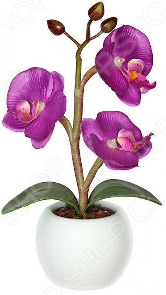Zakazat.ru: Светильник-ночник СТАРТ «Волшебная орхидея»