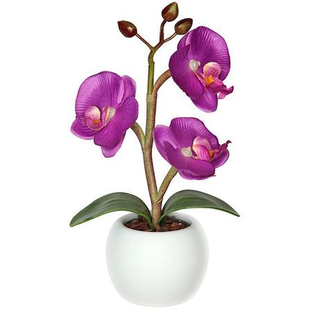 Купить Светильник-ночник СТАРТ «Волшебная орхидея»