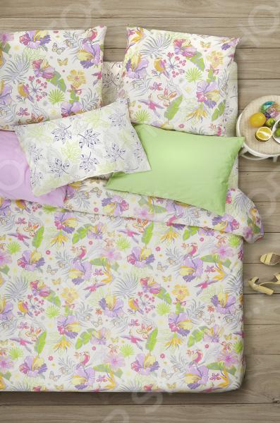 Комплект постельного белья Сова и Жаворонок «Карибы»
