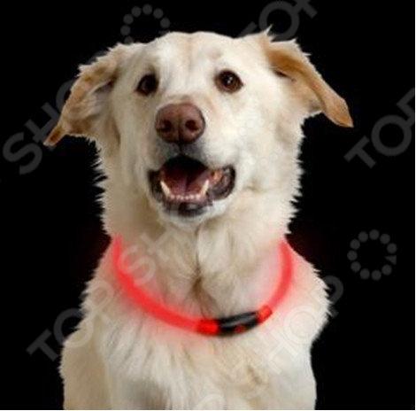 Ошейник для собак светодиодный Nitelze Nite Howl