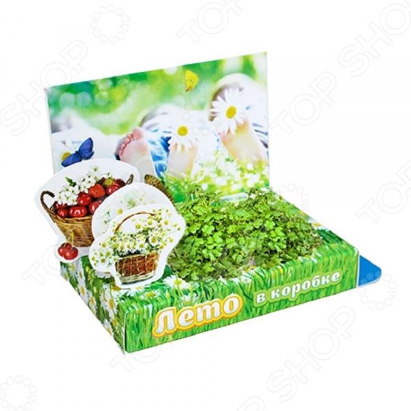 Набор подарочный для выращивания Happy Plants «Живая открытка: Лето в коробке» наборы для выращивания happy plant подарочный набор живая открытка с любовью