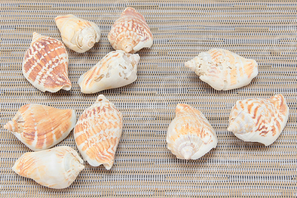 Ракушки декоративные Elan Gallery «Дары Желтого моря». В ассортименте