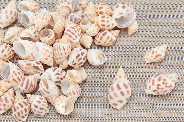 Ракушки декоративные Elan Gallery «Дары Кораллового моря». В ассортименте