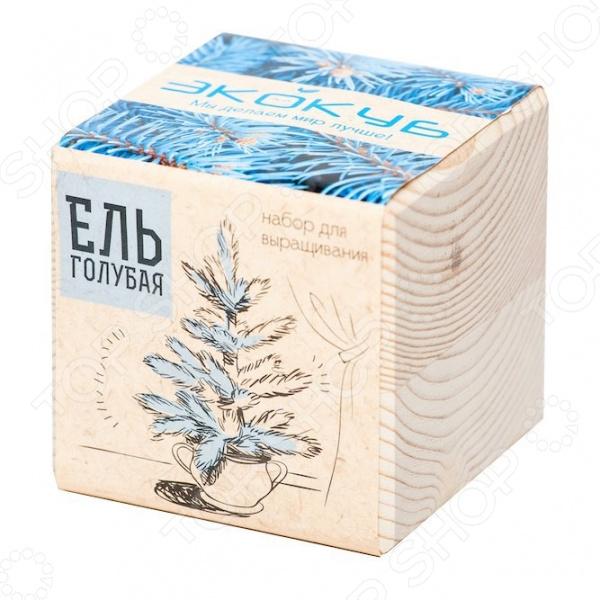 Набор для выращивания Экокуб «Голубая ель» наборы для выращивания растений вырасти дерево набор для выращивания ель канадская голубая