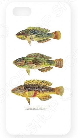 Чехол для IPhone 5 Mitya Veselkov «Рыбы»