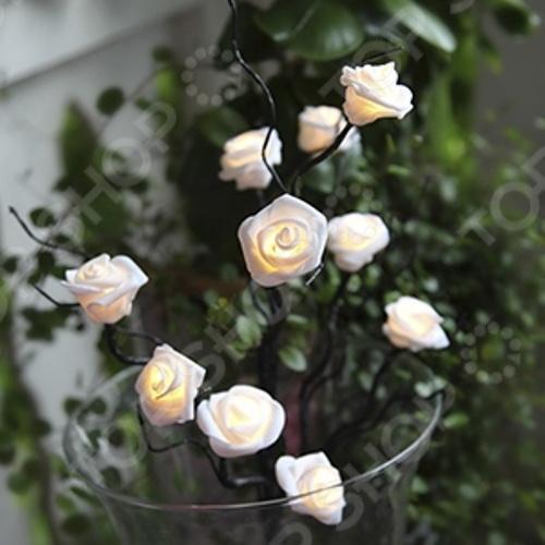 Гирлянда с таймером Star Trading Букет роз оригинальное рождественское декоративное украшение, которое в сочетании с елкой довершит чудесное преобразование интерьера перед праздником. Гирлянду можно поместить в вазу и украсить ею комод или тумбочку. В вечернее и ночное время гирлянда будет светить приятным светом, наполняя помещение праздничным мерцанием. Зимние праздники самые любимые и долгожданные и это не удивительно, ведь Рождество и Новый Год это всегда ожидание чего-то невероятного, сказочного и волшебного и для того, что бы это волшебство не рассеялось в ежедневных заботах и хлопотах стоит уделить особое внимание украшению интерьера. Дополните традиционную ёлку рождественскими композициями, венками, свечами, гирляндами и конечно не забудьте о праздничном декорировании фасада дома. Пусть ваш дом засияет праздничными огнями и заиграет яркими красками и тогда грядущий год непременно принесет в вашу семью счастье и радость. Модель работает от 3 батареек типа АА в комплект не входят .