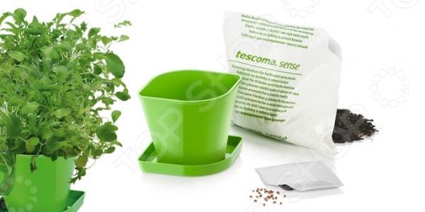 Набор для выращивания Tescoma «Азиатская смесь» наборы для выращивания растений вырасти дерево набор для выращивания ель канадская голубая