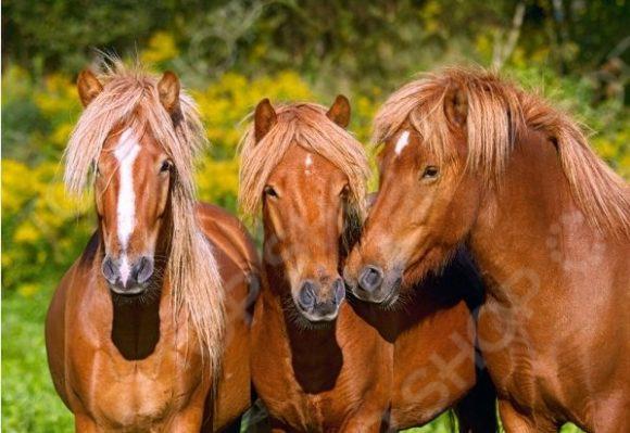 Пазл 1000 элементов Castorland «Лошади» 41945