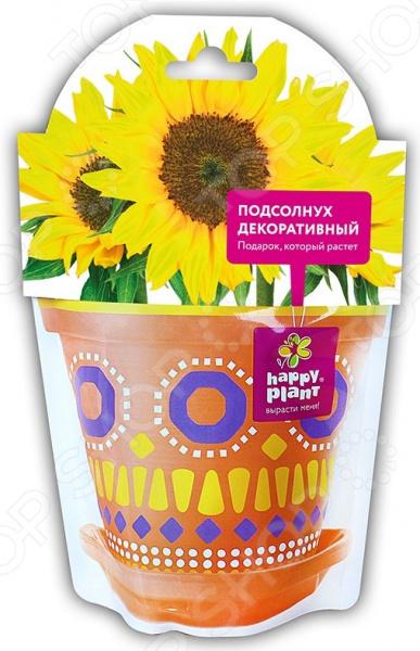 Набор для выращивания Happy Plant «Подсолнух декоративный» цена