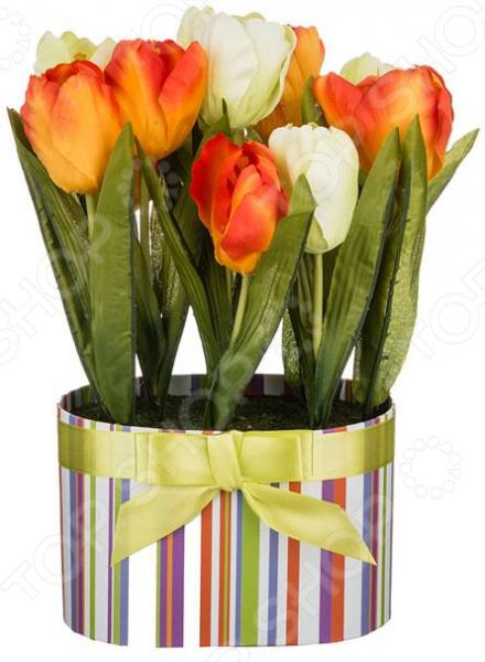 Декоративные цветы 70-543 куплю декоративные растения в севастополе