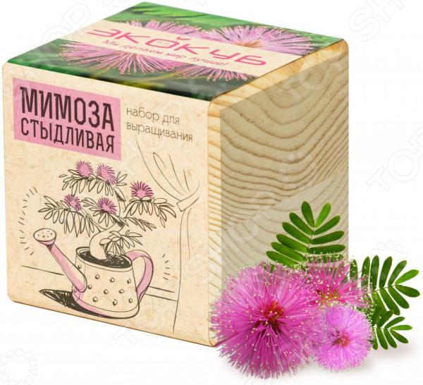 Набор для выращивания Экокуб «Мимоза»