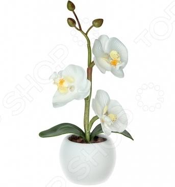 Светильник светодиодный «Волшебная орхидея». Цвет: белый рижский рынок купить цветы ночью
