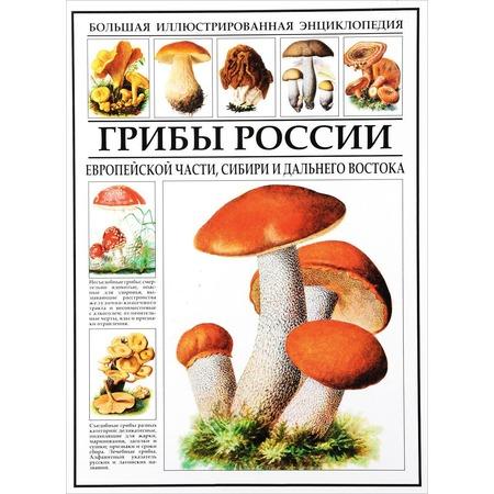 Купить Грибы России