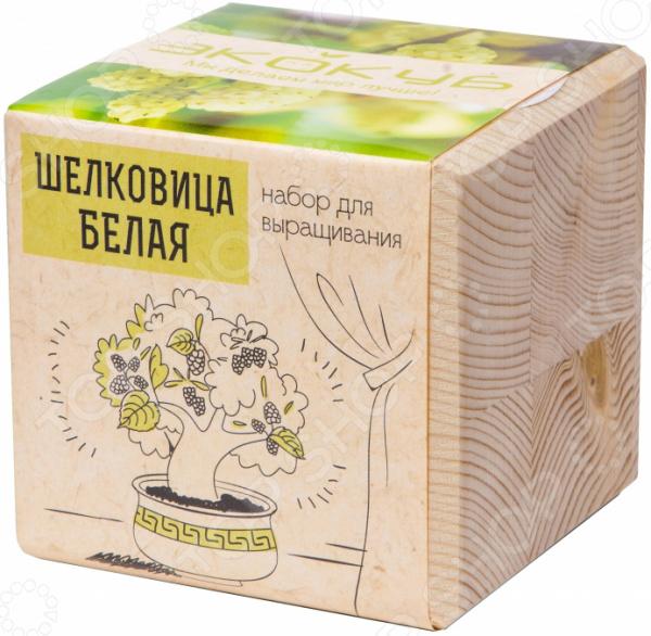 Набор для выращивания Экокуб «Шелковица Белая» набор с семенами для выращивания лаванда