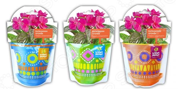Набор для выращивания Happy Plant «Бальзамин огонек». В ассортименте