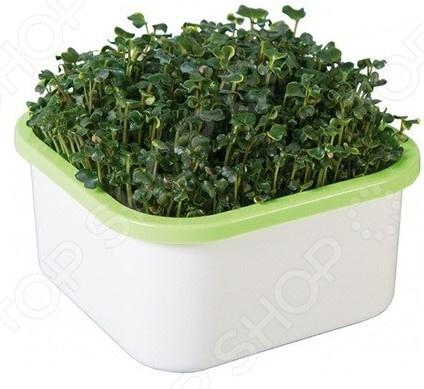 Проращиватель Здоровья клад для микрозелени гидропонная установка здоровья клад домашняя чудо грядка
