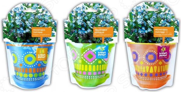 Набор для выращивания Happy Plant «Незабудка голубая». В ассортименте