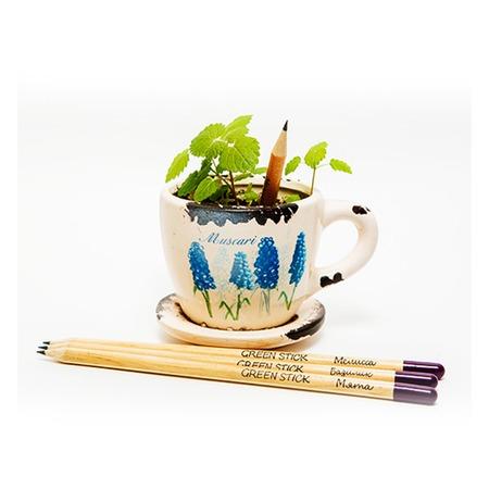 Купить Набор для выращивания Экочеловеки Eco «Растущие карандаши. Пряные травы»