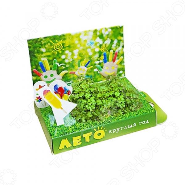 Набор подарочный для выращивания Happy Plants «Живая открытка: Лето круглый год» арт дизайн подарочный набор открытка с ручкой ворчливая ручка