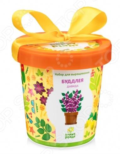 Набор для выращивания Happy Plant «Горшок. Буддлея Давида» набор для опытов и экспериментов happy plant горшок буддлея давида