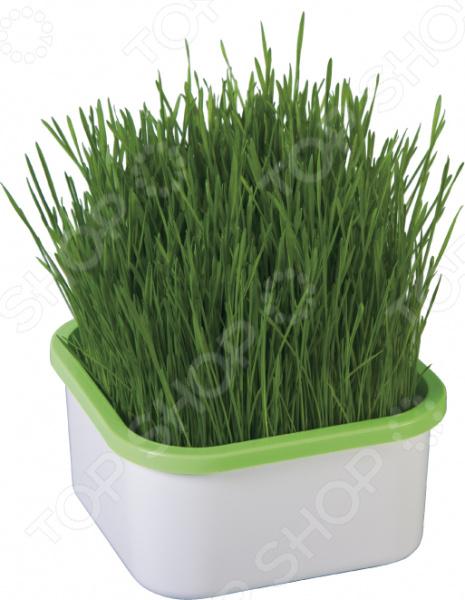 Проращиватель Здоровья клад для зеленой травки гидропонная установка здоровья клад домашняя чудо грядка