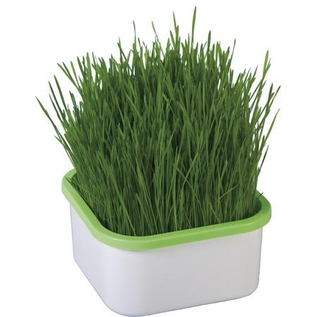 Купить Проращиватель Здоровья клад для зеленой травки