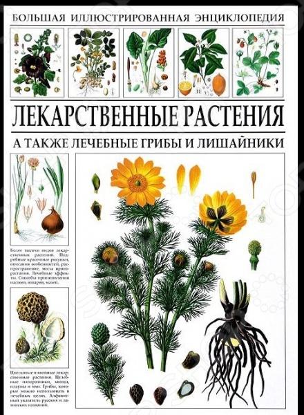 В книге описано более тысячи видов целебных растений. Для каждого дается цветное изображение, краткое описание, распространение, места произрастания. Изложены фармакологические эффекты, область применения лекарственного средства, недуги, от которых данное растение способно помочь. Даются конкретные методики приготовления отваров, настоек, мазей и ванн. Указаны противопоказания к применению, если они имеются. Помимо цветковых и хвойных растений в энциклопедию включены лекарственные папоротники, хвощи, плауны, мхи, водоросли и грибы. Издание является капитальным справочником для всех, кто желает познакомиться с миром лекарственных растений.