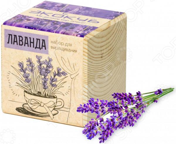 Набор для выращивания Экокуб «Лаванда» наборы для выращивания растений вырасти дерево набор для выращивания ель канадская голубая