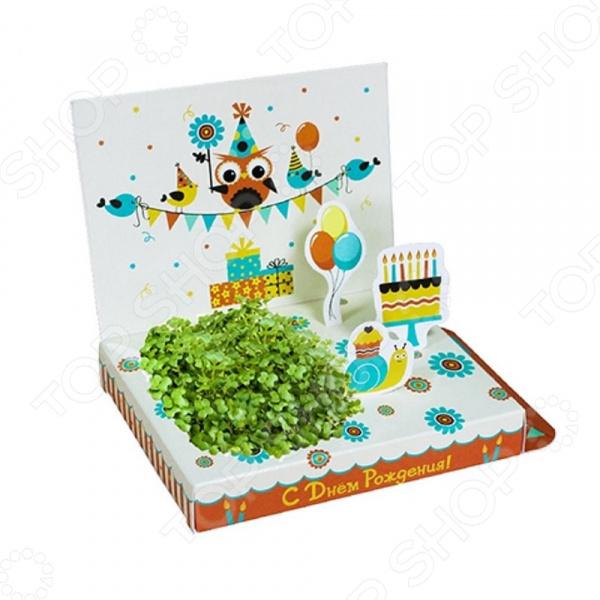 Набор подарочный для выращивания Happy Plants «С Днем рождения! Совенок» набор подарочный для выращивания happy plants живая открытка букет роз